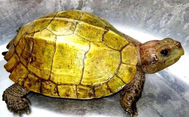 mơ thấy rùa vàng
